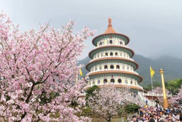 Du xuân Đài Loan, ngắm hoa đào nở sớm